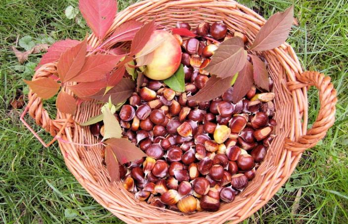 frutti-invernali-benefici